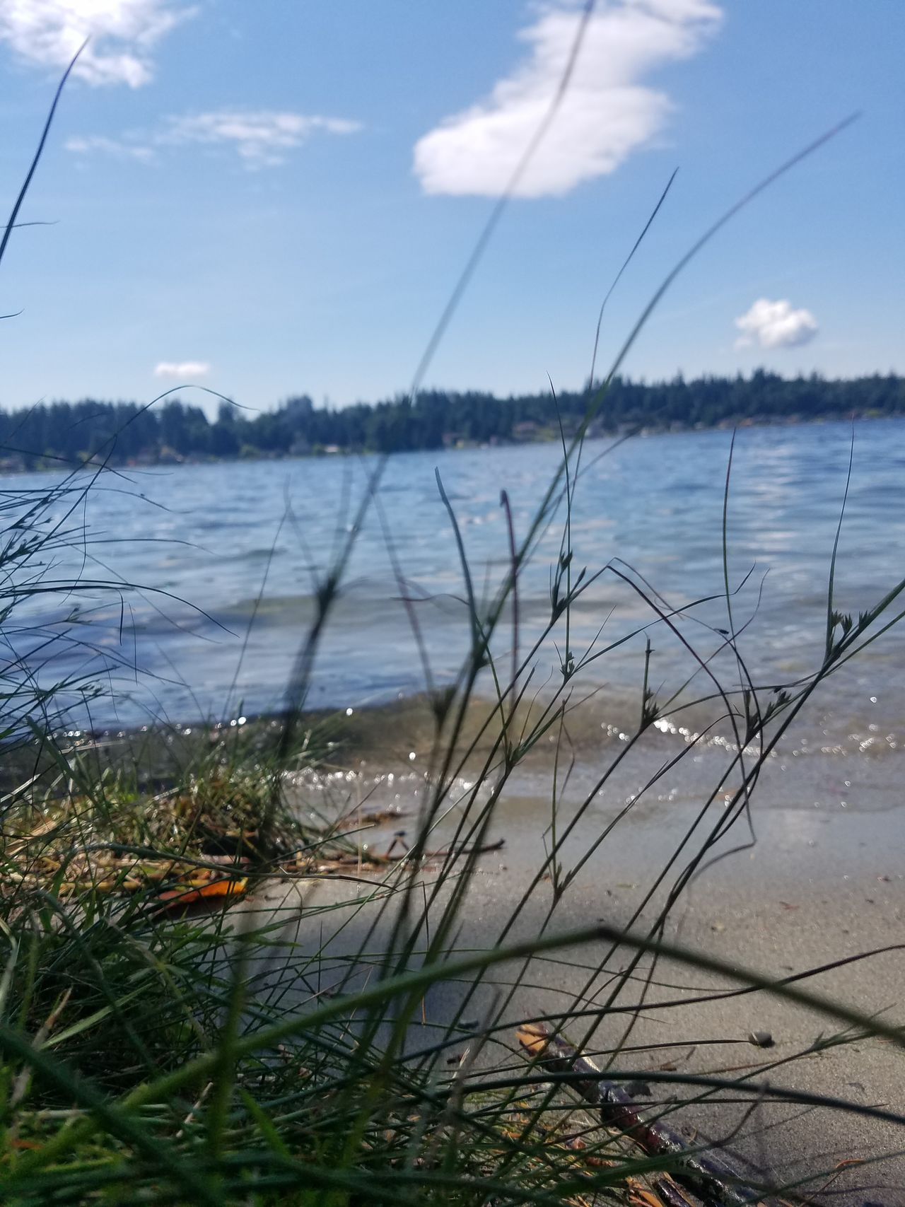 Water Beach Nature Grass Lake Landscape Cloud - Sky Uncultivated No People Outdoors Sand Sky Day
