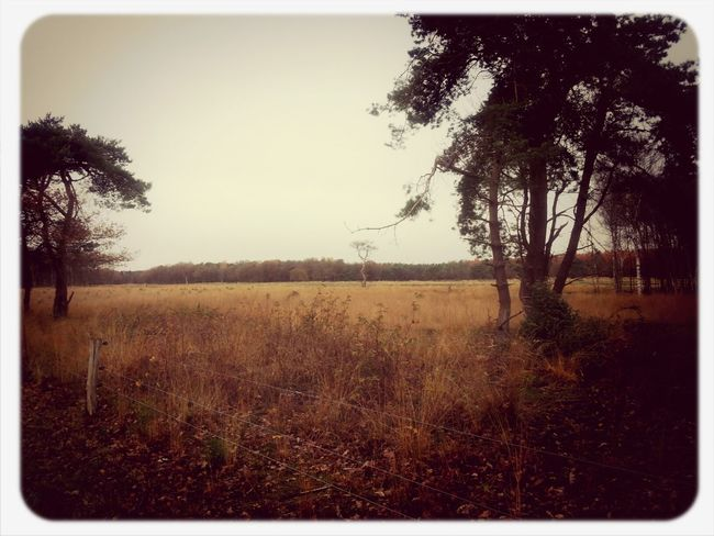 walking autumn boesboes