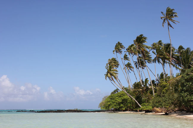 Blue Crystal Clear Escaping Fiji Heaven Holiday Island Island Life Isolation Nature Ocean Pacific Ocean Palm Tree Paradise Paradise Beach Reef Relaxation Samoa  Samoan Savai'i Tonga Tropical Climate Tropical Paradise Turquoise Turquoise Water
