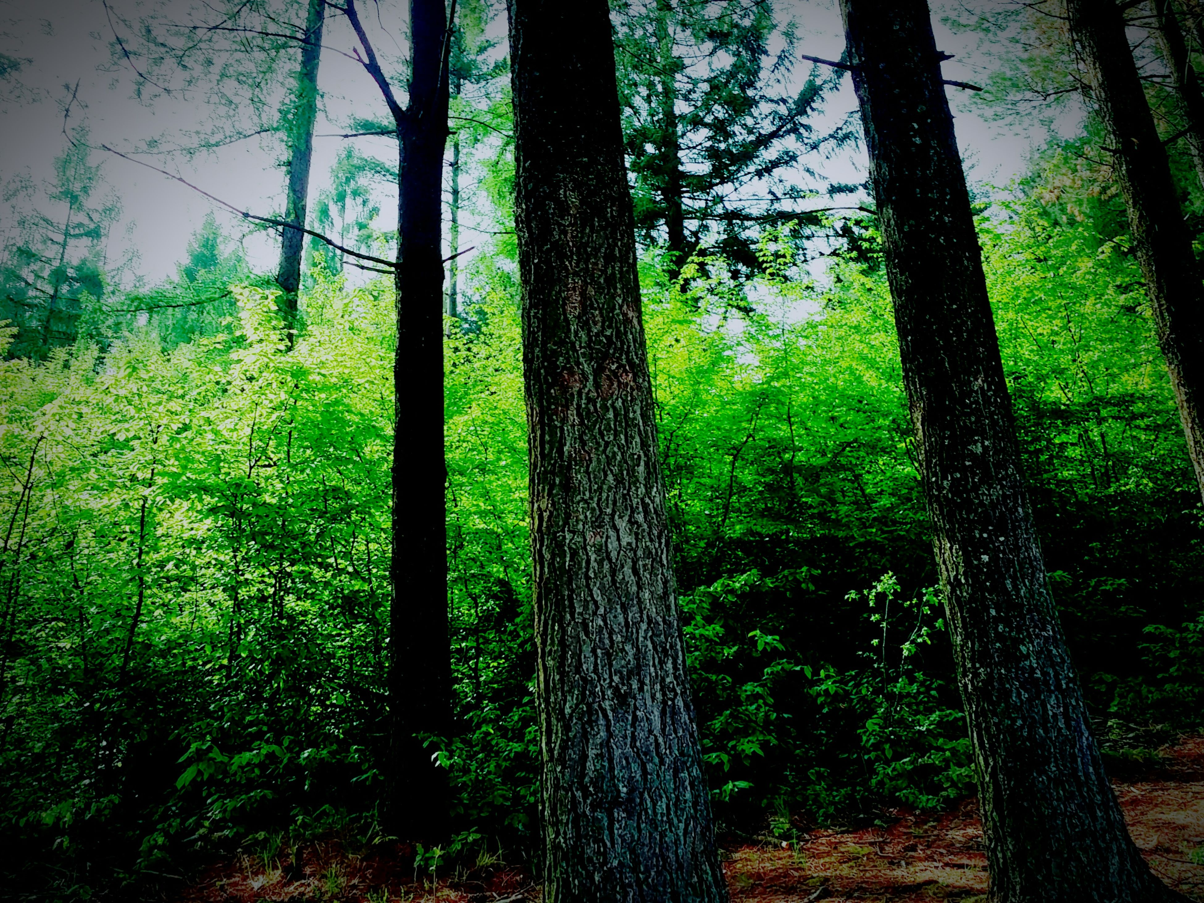 tree, tree trunk, forest, growth, tranquility, nature, grass, woodland, tranquil scene, field, green color, beauty in nature, landscape, sunlight, branch, plant, day, scenics, outdoors, non-urban scene
