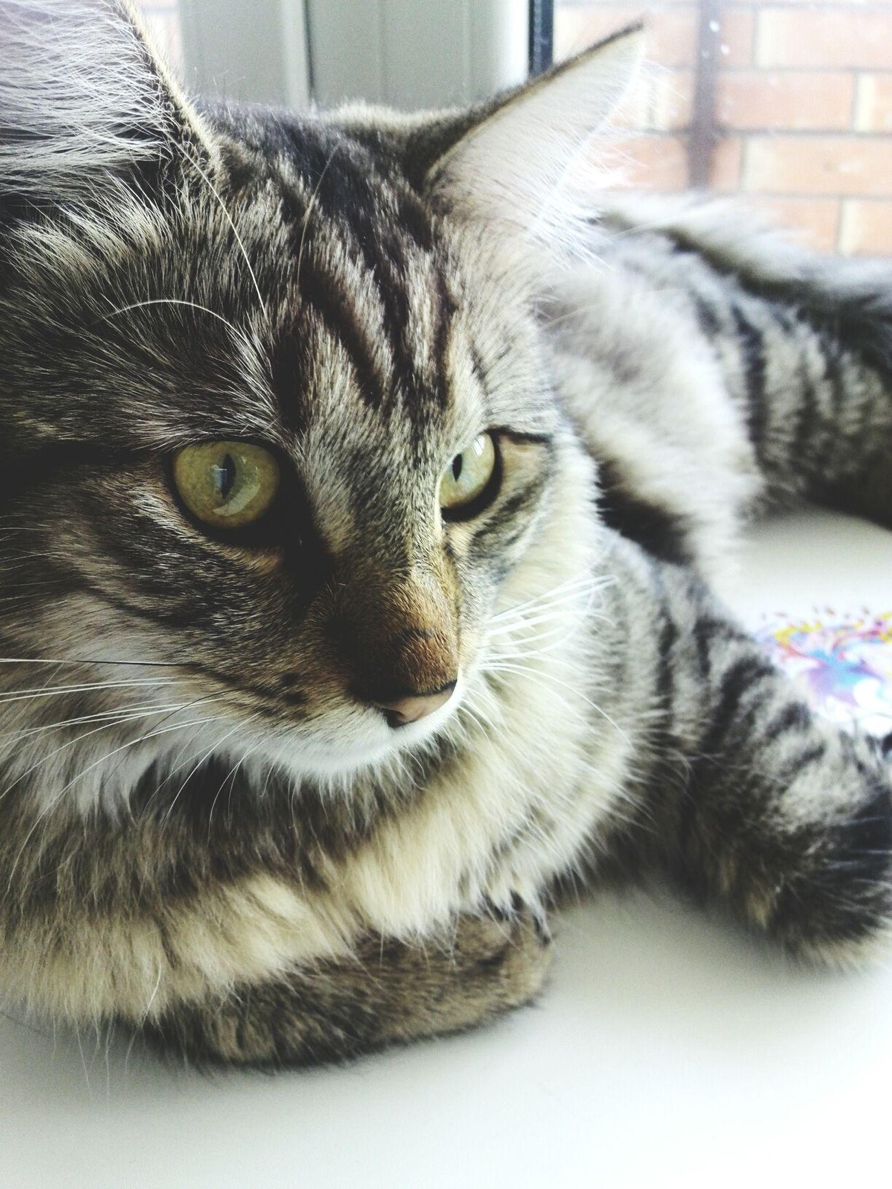 My cat Mortimer Mortimer Cat Cat Lovers Animals Morning Goodmorning Enjoying Life