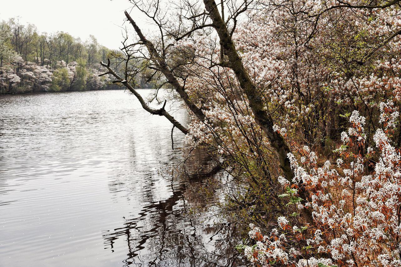 Spring2015 Dutch Landscape Water Reflections Walking Around Landscape