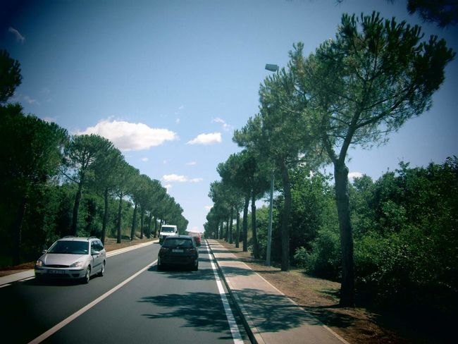 Cars Trees Road Traffic Driving Sky Day Nature Roadtrip Getty Images Alamy Images Peaceful Relaxing Escapefromreality Beautifulview EyeEm EyeEm Gallery EyeEmNewHere Photography Littlemoments Tranquility Adventure Wanderlust Summer EyeEmNewHere