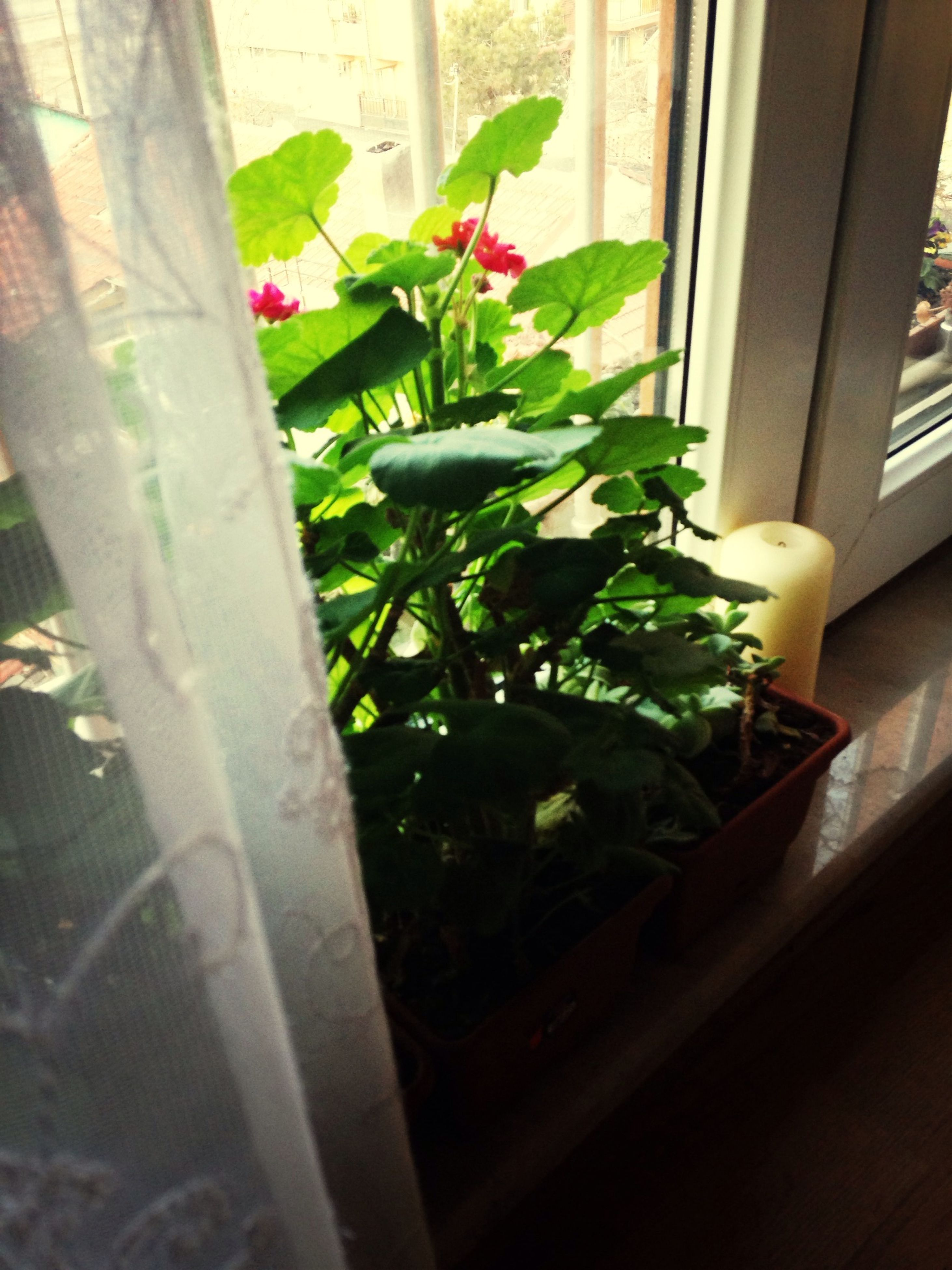 plant, potted plant, growth, indoors, leaf, green color, window, built structure, close-up, no people, nature, day, freshness, front or back yard, wall - building feature, sunlight, architecture, house, home interior, high angle view