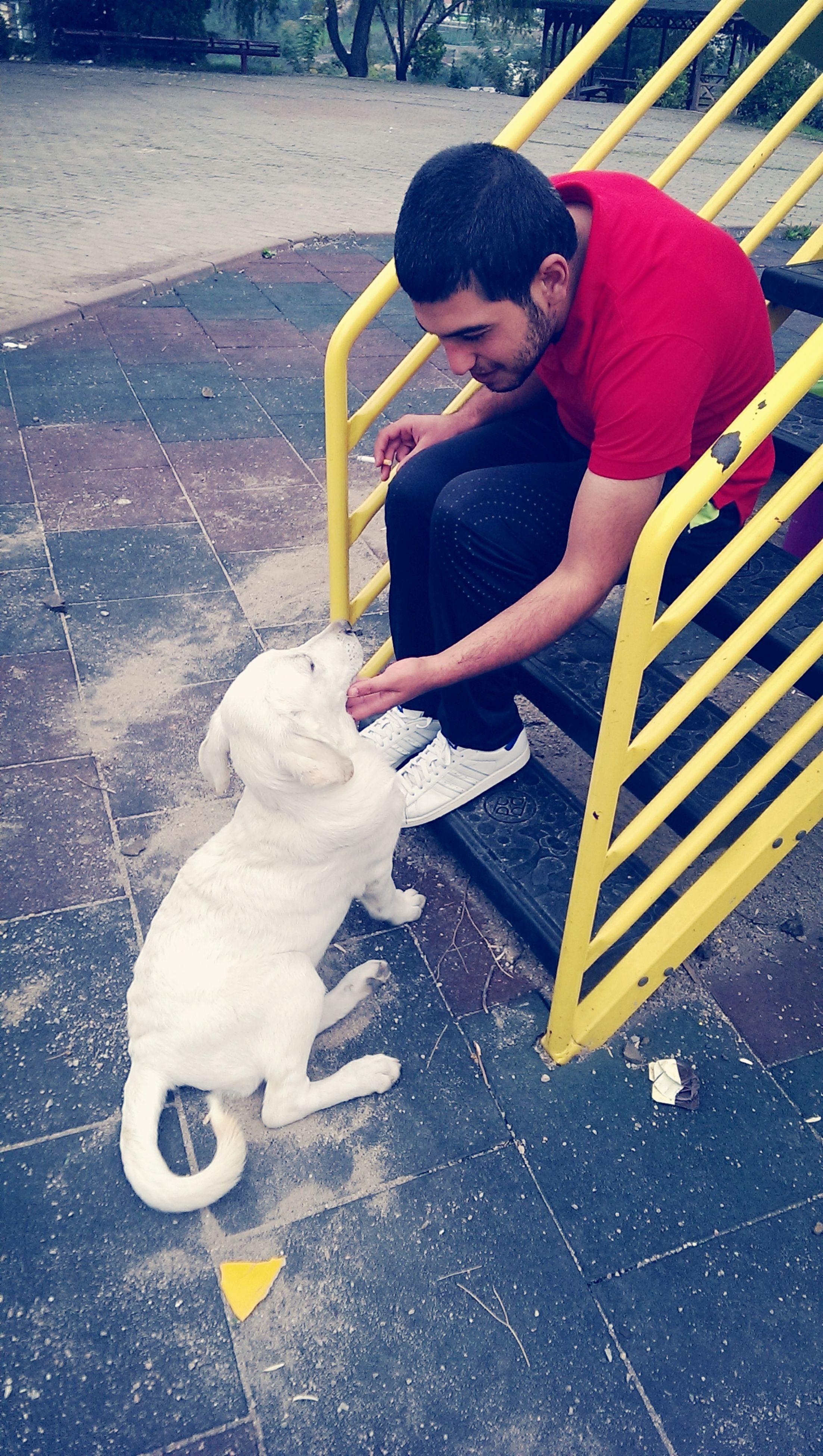 Dog Dogs doglove