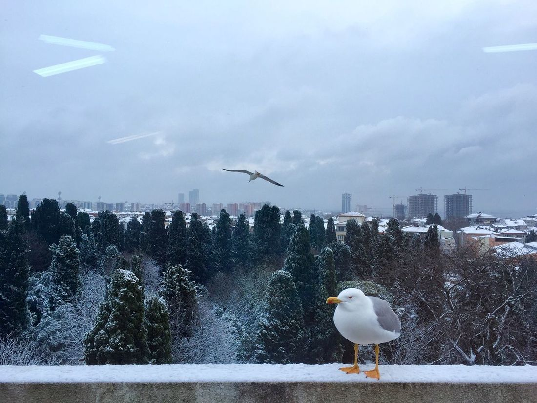 Winter in Istanbul Seagulls sityscape Sityscape View From The Window... Wintertime View From The Top Urban Landscape First Eyeem Photo The Great Outdoors - 2017 EyeEm Awards
