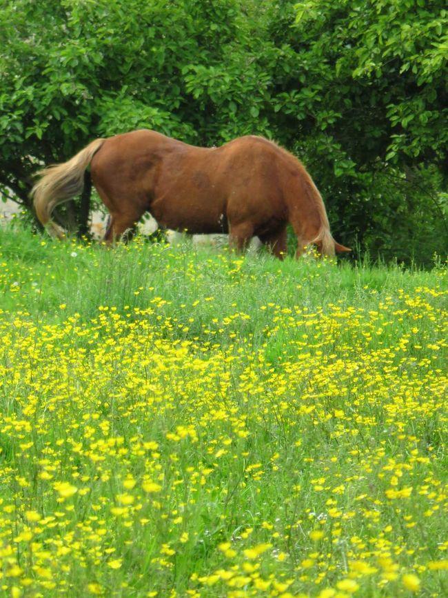 Caballo Paciendo Horse Pasturing Nature's Diversities 2016 EyeEm Awards