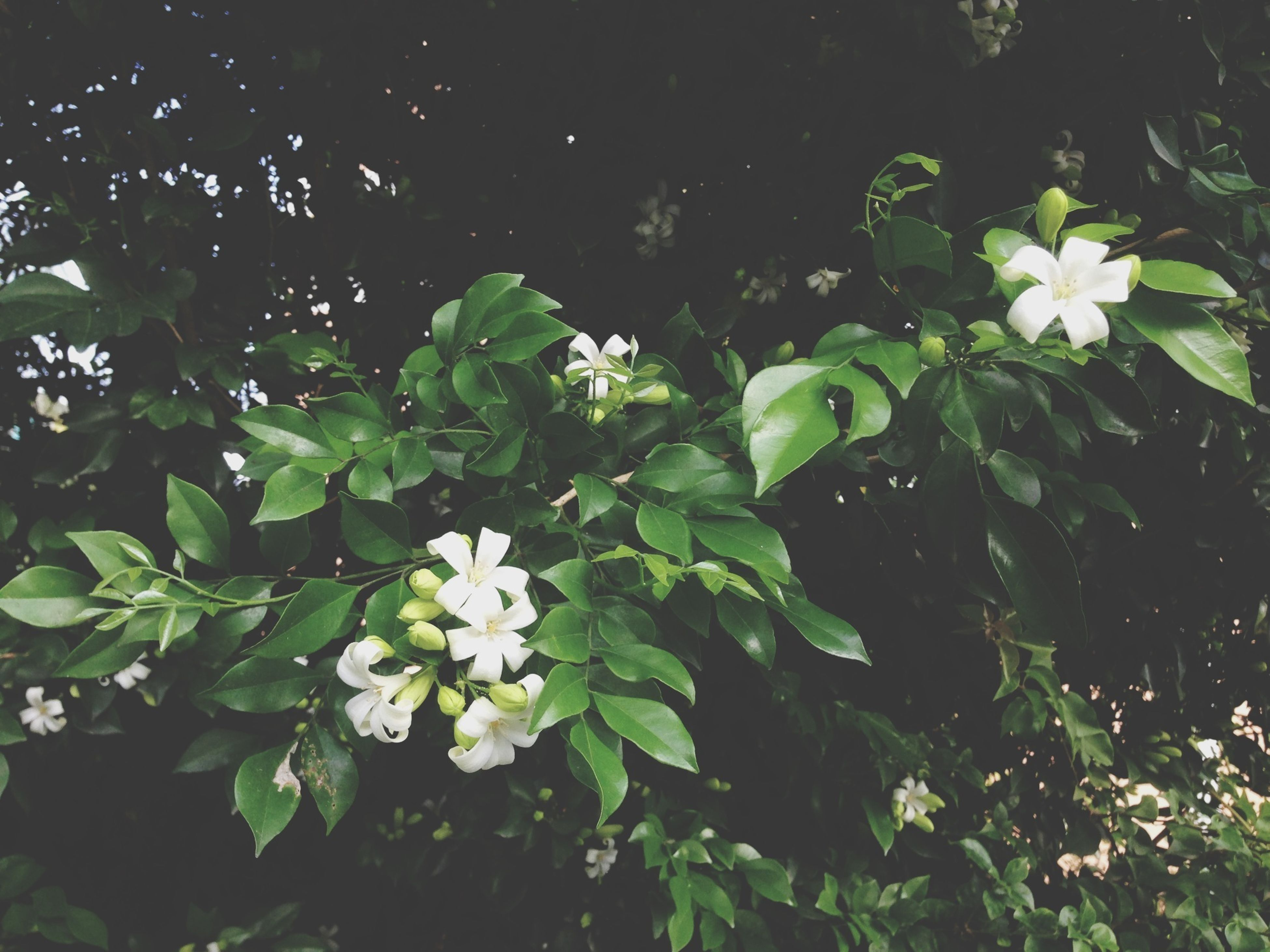 flower, growth, freshness, fragility, leaf, beauty in nature, plant, white color, petal, nature, blooming, green color, flower head, high angle view, in bloom, close-up, outdoors, no people, day, blossom