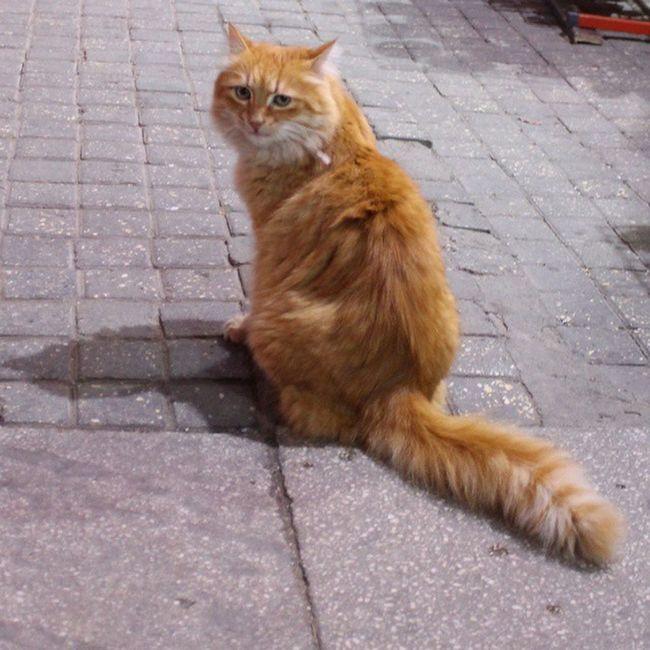 Taksim Perili Köşkün Kedisi... Taksim Periliköşk Istiklalcaddesi Buinstagramdakedivar kedi cat