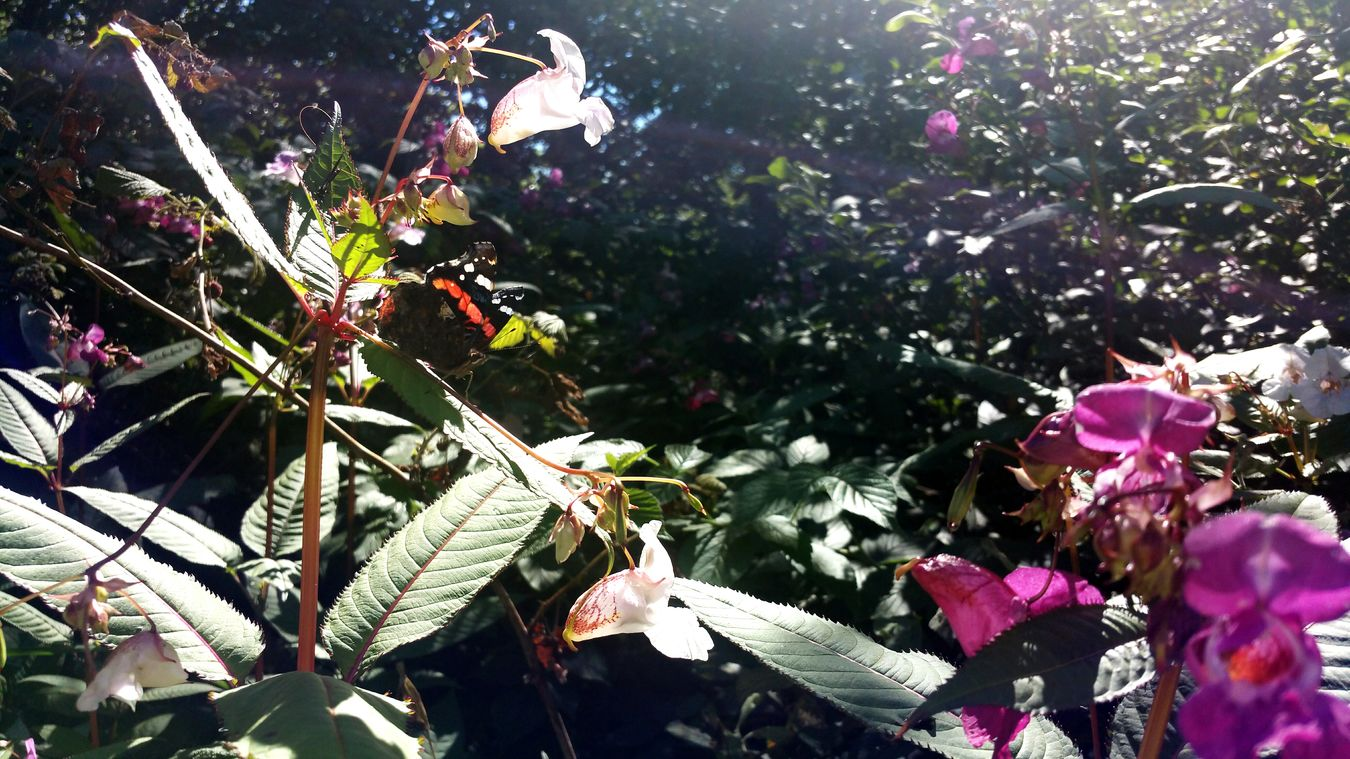 Summer Butterfly Samsung Galaxy Note 4 Flowers Sweden