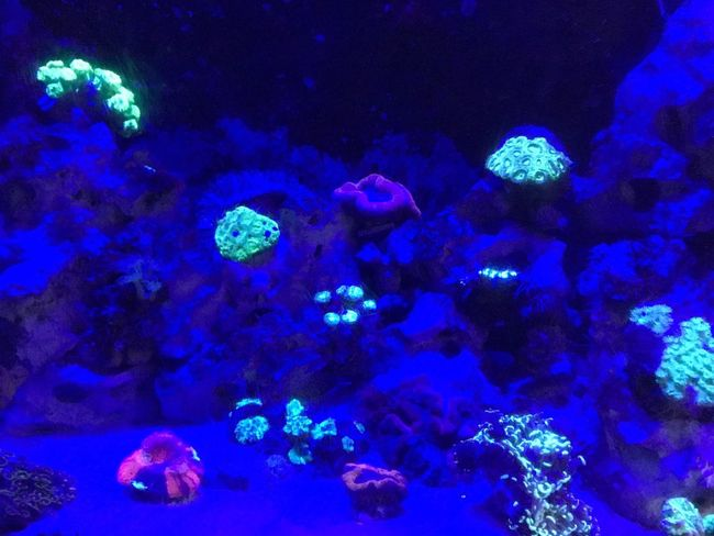 Underwater Sea Life Water UnderSea Fish Sea Jellyfish Blue No People Group Of Animals Animals In The Wild Animal Themes Swimming Animal Wildlife Clown Fish Coral Nature Aquarium Large Group Of Animals Beauty In Nature