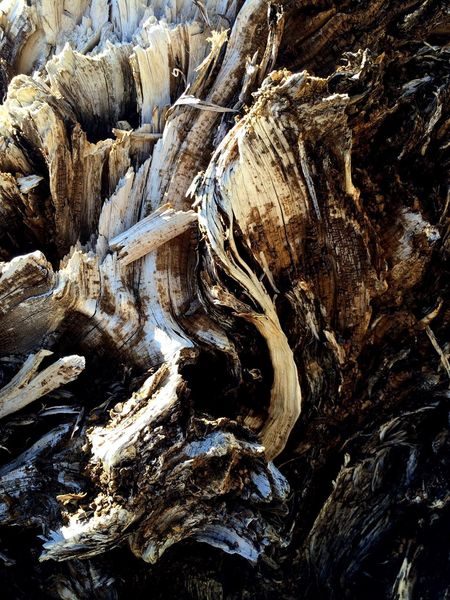 Uprooted Trunks Uprooted Tree Uprooted Uprooted Trunk Abstract Tree