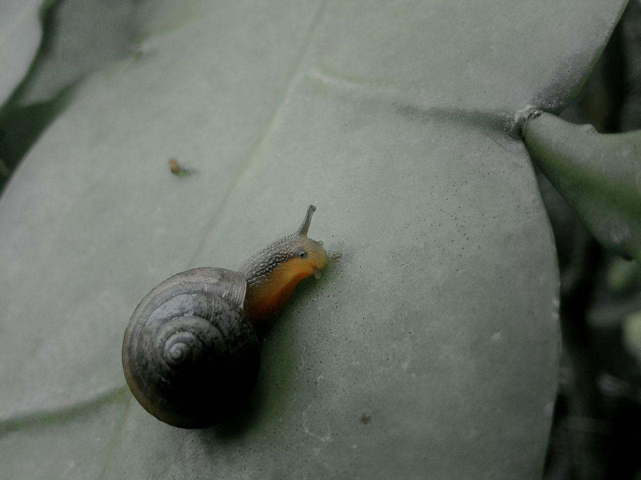🐌🐌 Hello World Simple Beauties Beautiesofmyyard Beauties Of Nature Beautiful Beautiful Nature Nature Gastropoda