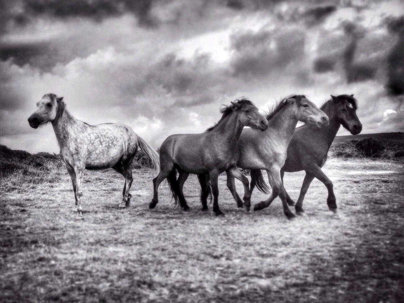 Men an Tol Horses The Environmentalist – 2014 EyeEm Awards NEM Black&white The Moment - 2014 EyeEm Awards