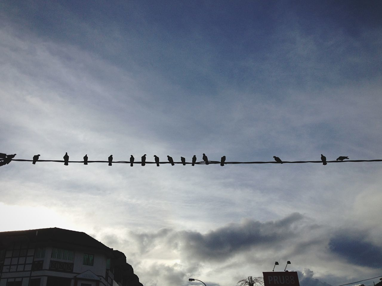 Birds on a wire Malaysia Tanah Rata Sky Morning Birds Wire Cameron Highlands Lining Up