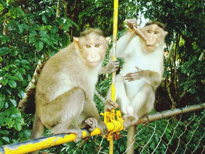 Photographic Memory College Trip :) Forever In Memory Monkeys Zoo Expression OldMemories Eating Ice Cream Hanging Out Banglore India Nature_collection Missing Friends Learn & Shoot: Working To A Brief EyeEm Best Shots Learn & Shoot: Simplicity Animal Love Q