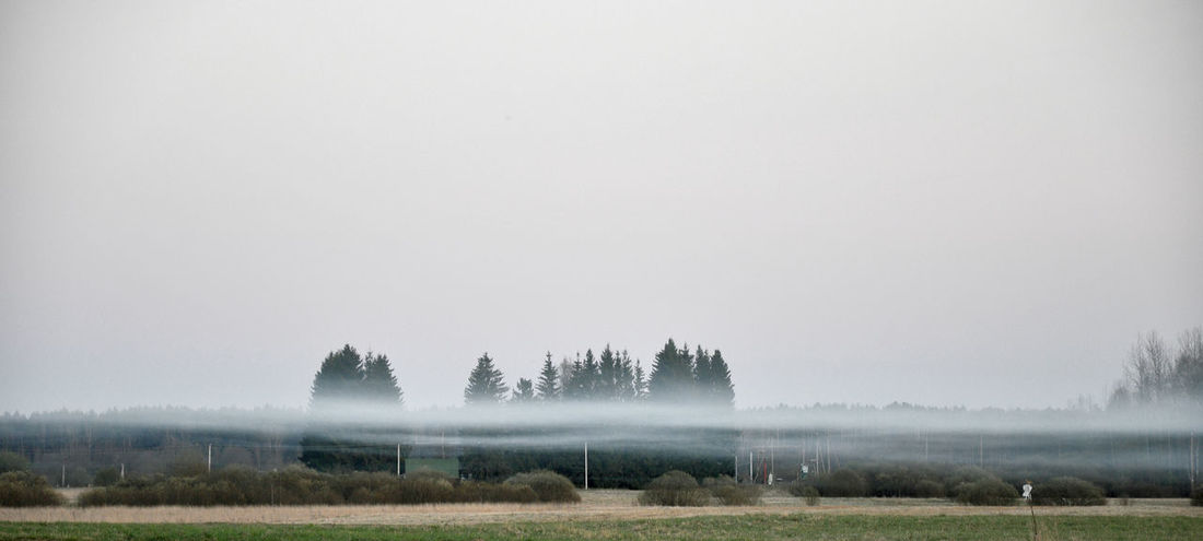 Autumnal fog Agriculture Autumn Beauty In Nature Countryside Day Field Fog Grass Hazy  Landscape Lithuania Melancholia Melancholic Landscapes Mist Nature No People Nostalgia Nostalgic  Outdoors Rural Scene Scenics Sky Tranquil Scene Tranquility Tree