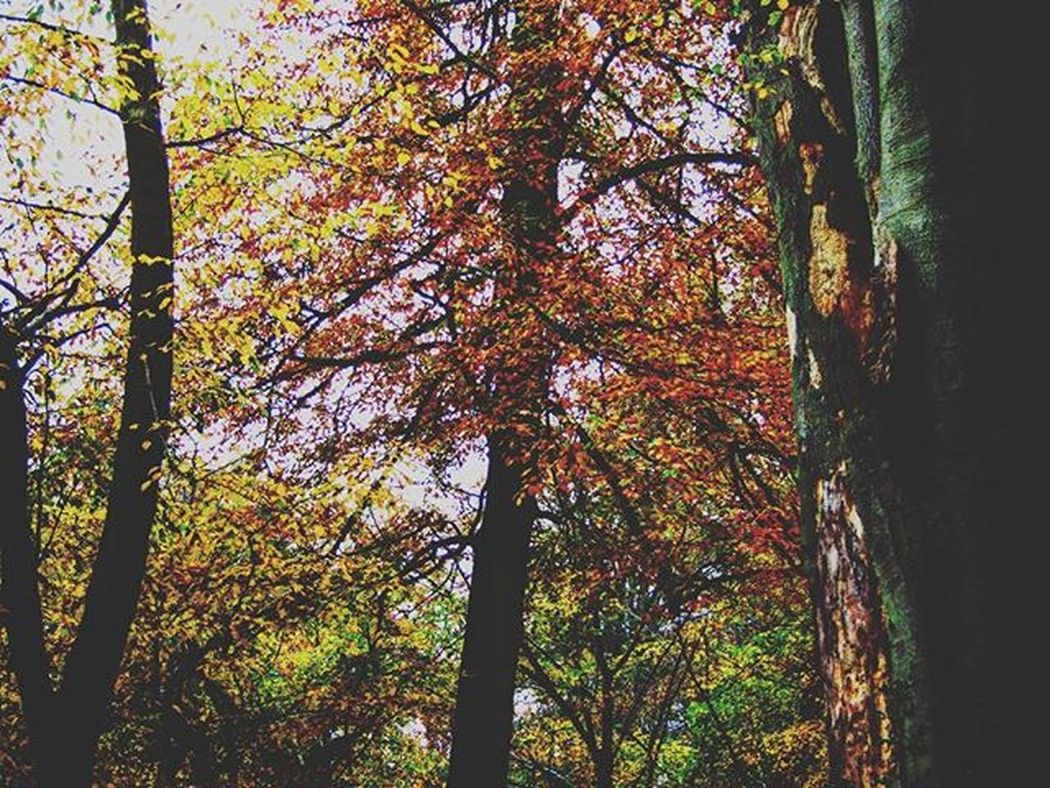 Likeit Loveit Goood Trees Bushes Autumn Fallingleaves Orangeleaves Brownleaves Branch Greenleaves Naturelovers Muddy Beautiful Forrest Fallingleaves