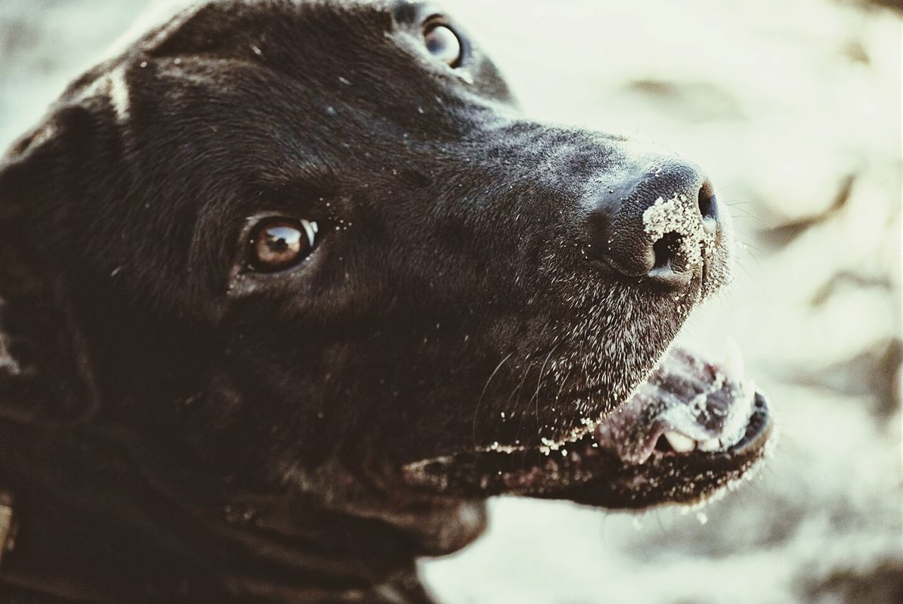 Beautiful stock photos of dogs, Animal Themes, Close-Up, Day, Dog
