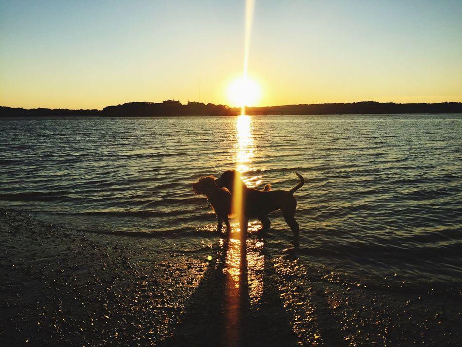 Maine Sunset Beach Dog Love First Eyeem Photo