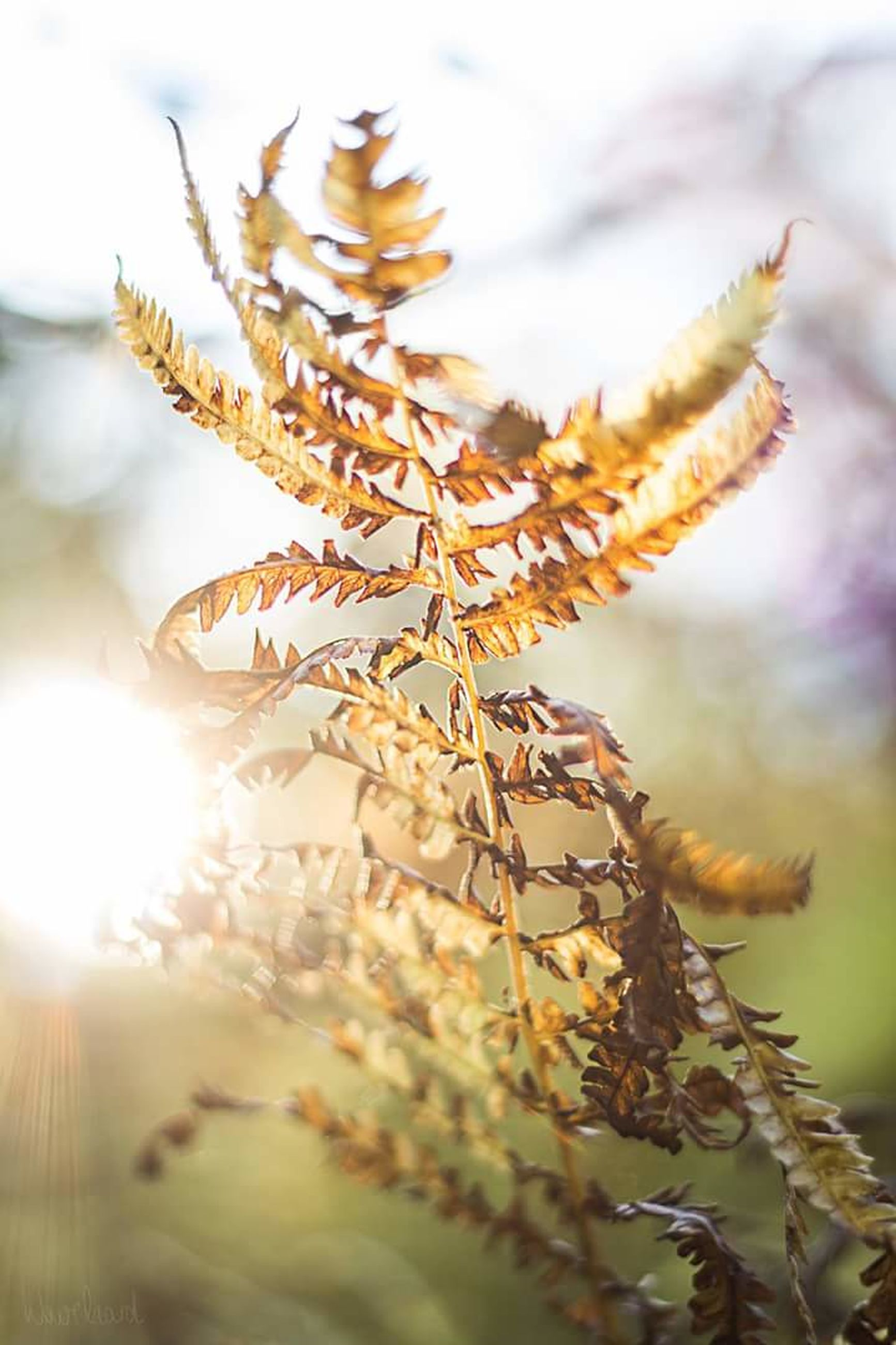 focus on foreground, close-up, growth, nature, plant, sunlight, sky, beauty in nature, selective focus, tranquility, outdoors, day, twig, sun, no people, fragility, stem, growing, sunbeam, botany, sunny, scenics, tranquil scene