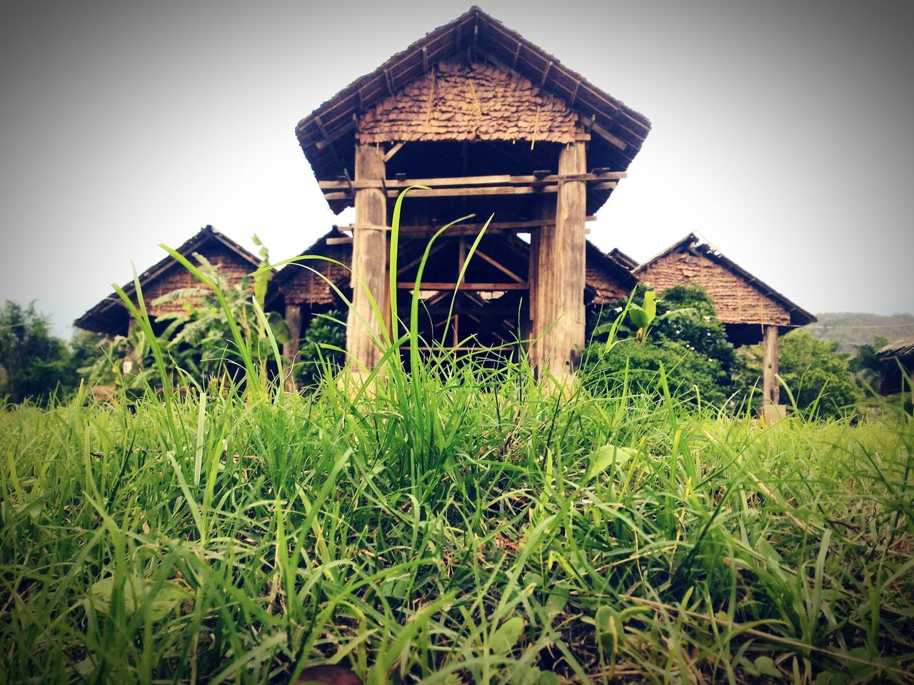 architecture, built structure, grass, building exterior, house, field, low angle view, clear sky, outdoors, day, sky, landscape, plant, nature, growth, barn, no people, animal themes, mammal