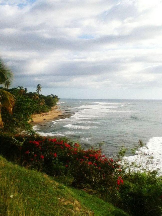 Naturaleza Playa Rincon Puerto Rico Islatropical