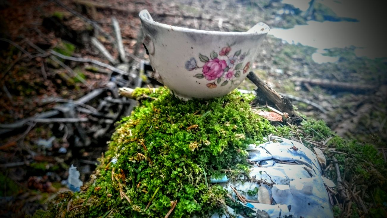 Coffecup Nature Decay