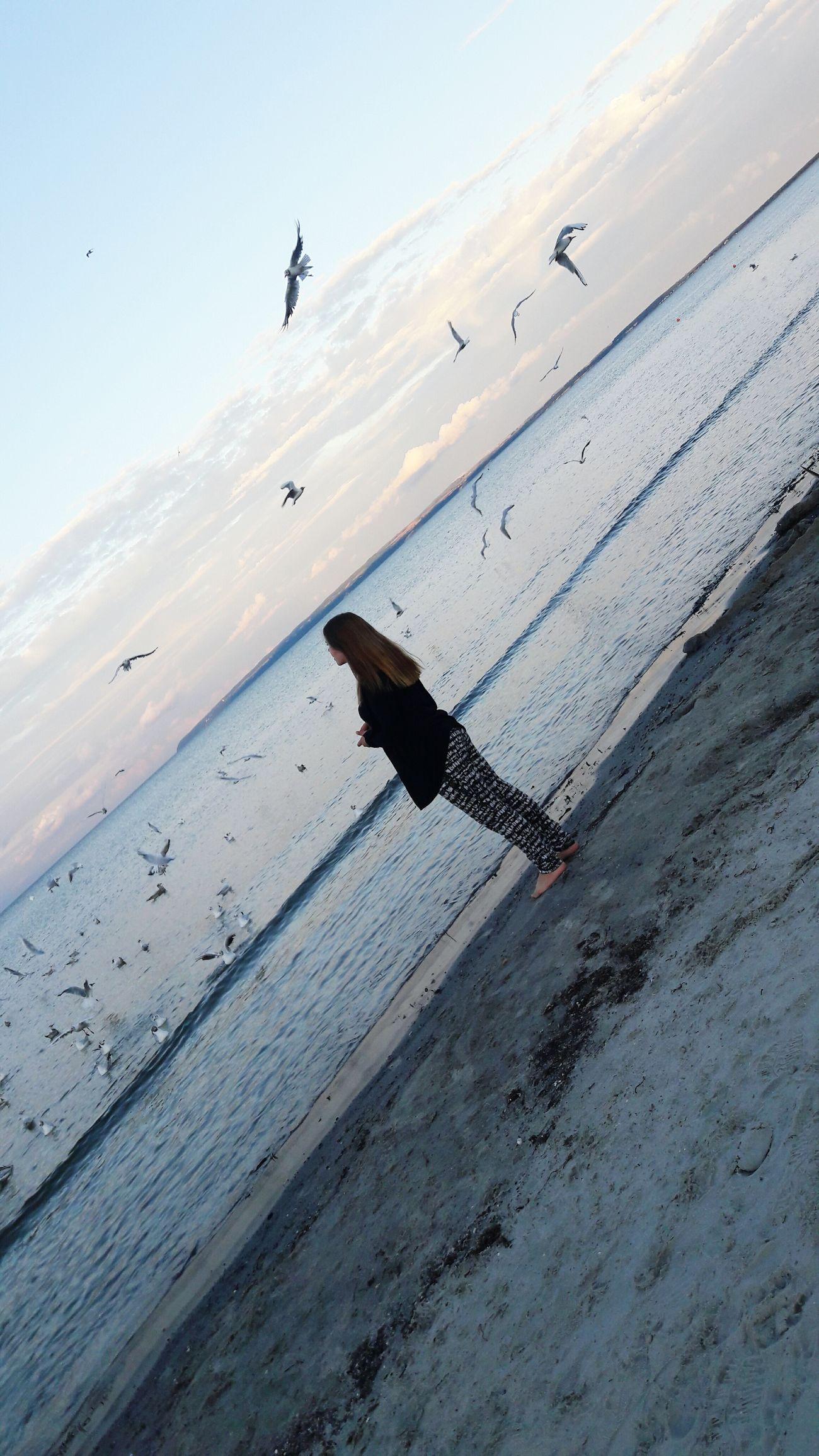Ich Sonne, Strand Und Meer Ostsee Möwe Im Flug