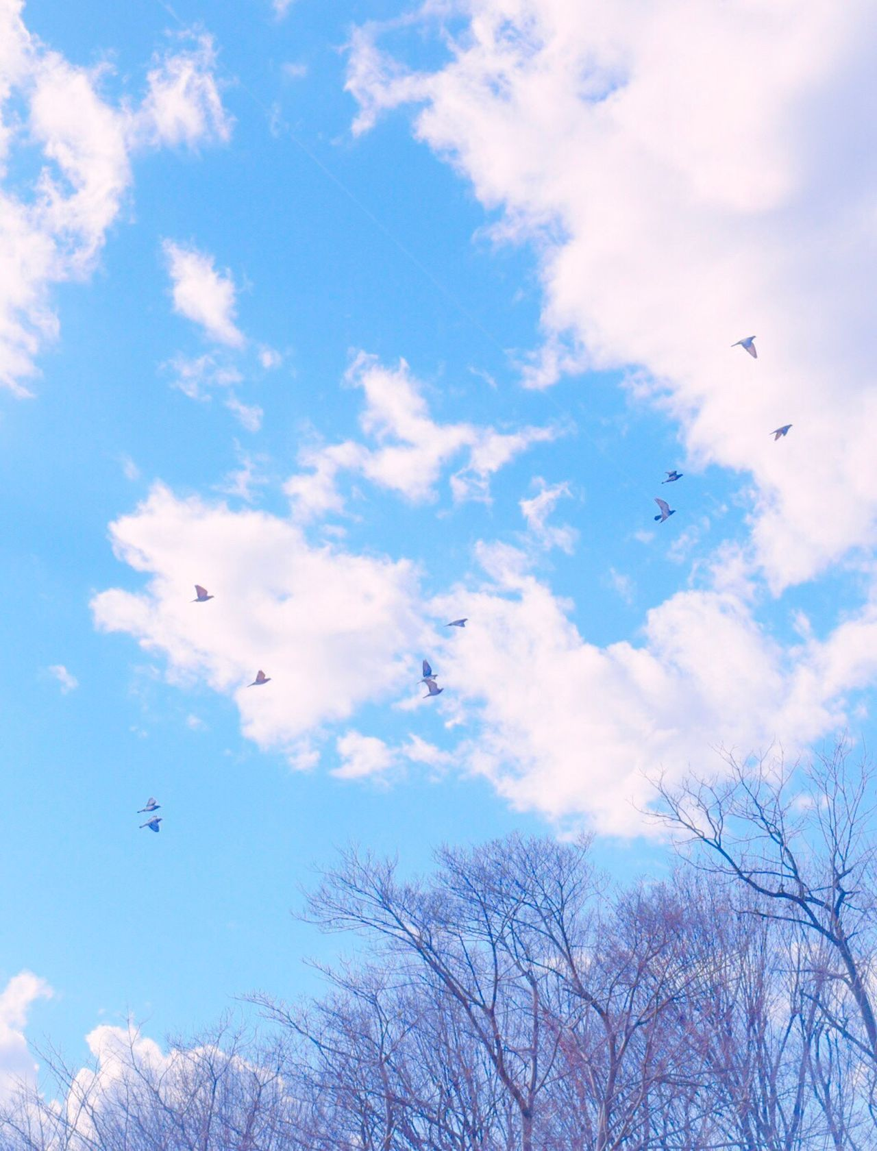 Flying Sky Low Angle View Tree Nature Bird Animal Themes No People Large Group Of Animals Beauty In Nature Animals In The Wild Day Outdoors Tranquility Cloud - Sky Migrating Flock Of Birds