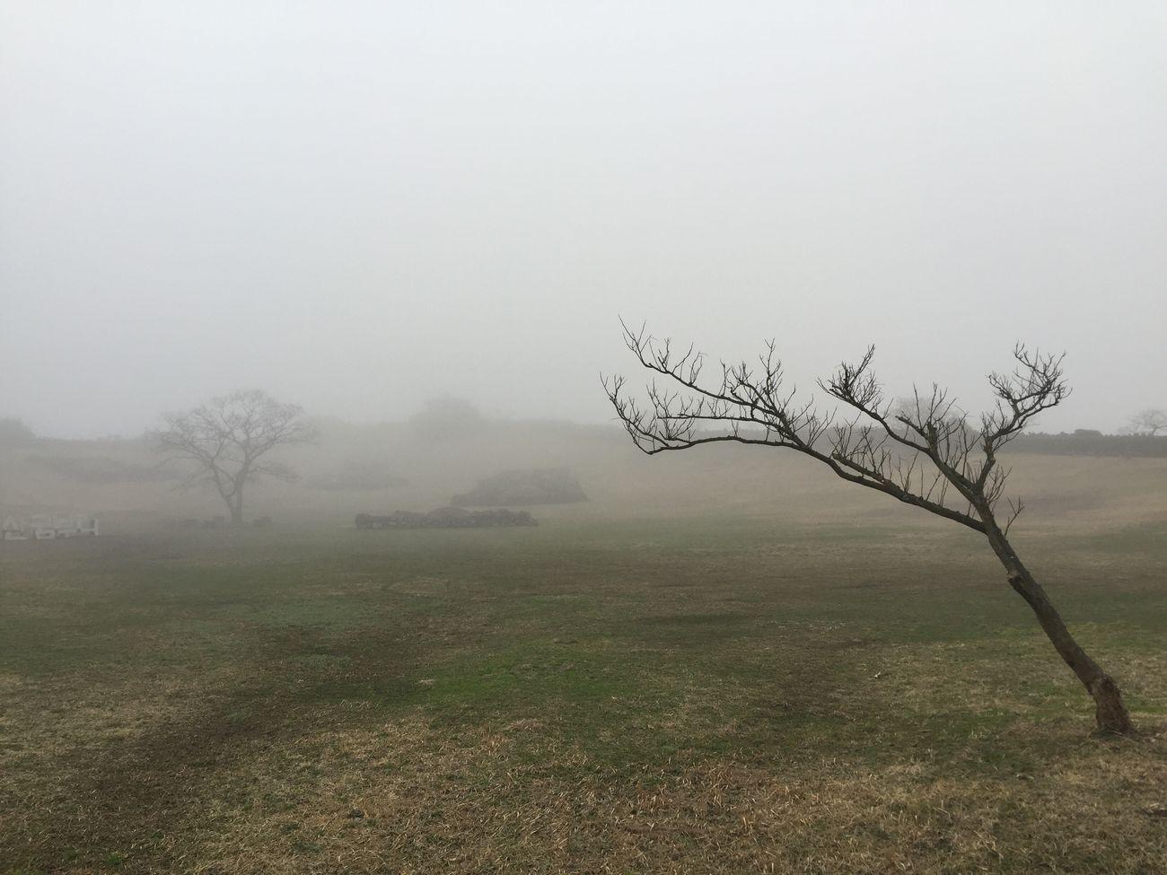 Jeju JEJU ISLAND  Fog Foggy Sangumburi