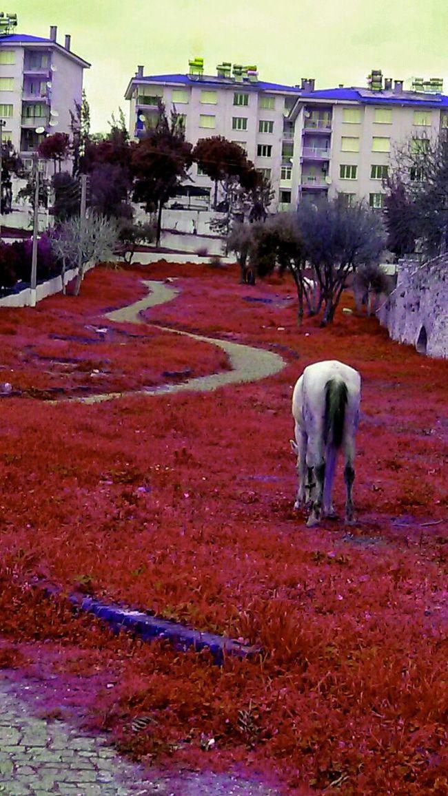 Horse ı Love Horses Colourful Grass Horsesback Enjoying Life