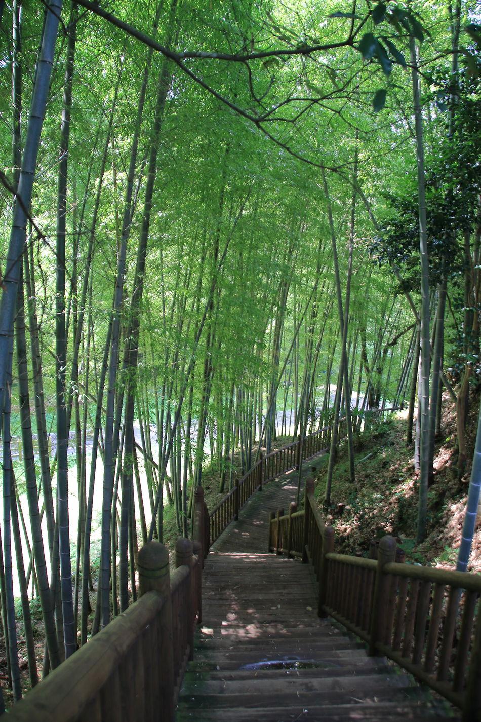 夏の竹林 鹿児島県湧水町 Bamboo Forest From My Point Of View Catch The Moment Landscape Outdoors Beauty In Nature My Fevorite Place