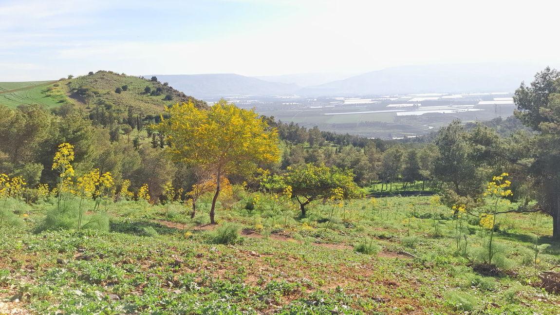 Jordan valley view