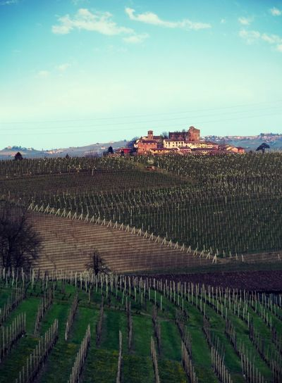 Agriculture Architecture Beauty In Nature Building Exterior Built Structure Castle Day Field Growth Italy Landscape Nature Outdoors Rural Scene Scenics Sky Tree Vineyard Winemaking EyeEmNewHere Langhe ıtaly Hills Vine Your Ticket To Europe