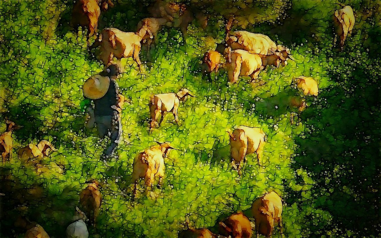 mammal, cow, domestic animals, growth, field, nature, livestock, plant, tree, green color, day, outdoors, men, farm animal, full length, people
