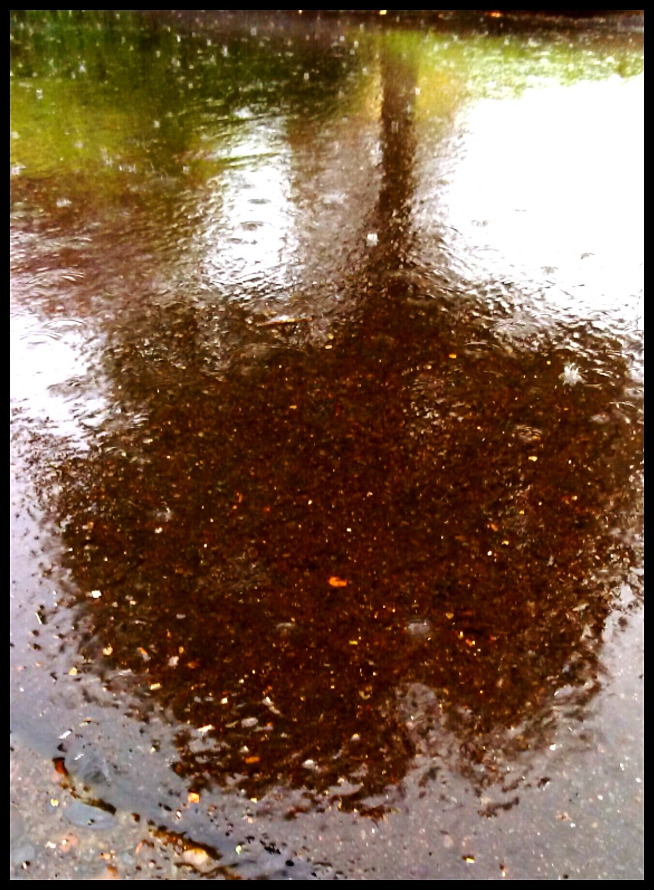 Reflection_collection Raining Outside Rainy Day Out And About No People Oregon Weather Soggy Series Soggy Dripping From Rain Puddleography Oregon Its Raining Its Pouring  Color Palette Eyeemphoto