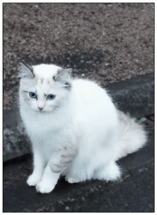 Chat CHATFIE Cat Catfie Cats Of EyeEm Cat♡ Chatte Gato