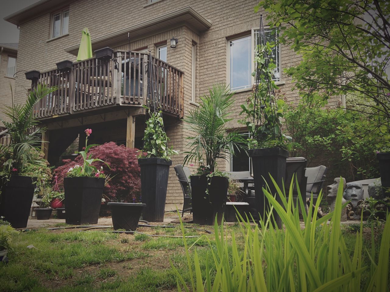 plant, growth, potted plant, building exterior, architecture, outdoors, built structure, day, no people, grass, nature, tree