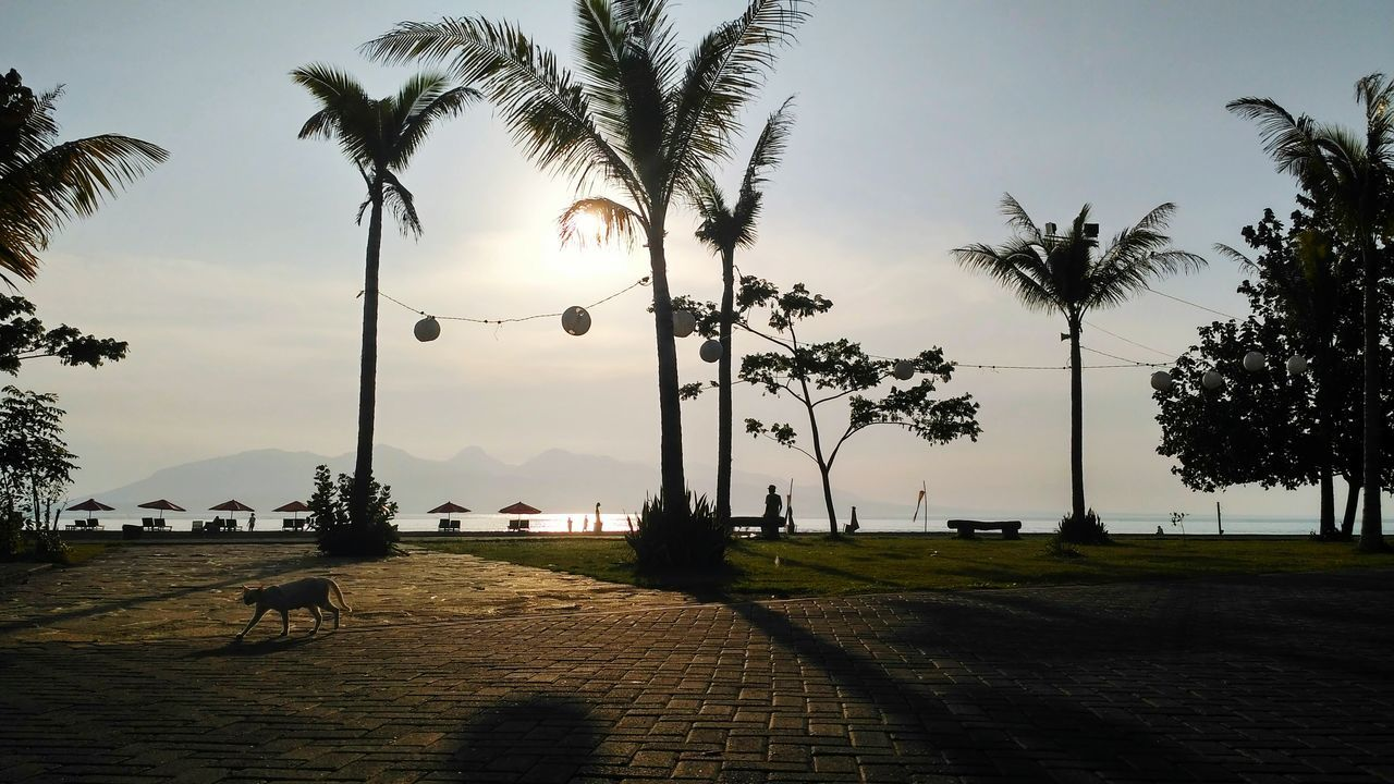""" _ start the day :) _ flic.kr/p/Mcykuq _ Sunlight Incidental People Palm Tree Sunbeam Scenics Beauty In Nature Cat Of The Day Sunshine Sky Beach Life Beach Day"