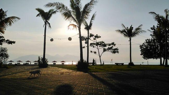 """ _ start the day :) _ flic.kr/p/Mcykuq _ Sunlight Incidental People Palm Tree Sunbeam Scenics Beauty In Nature Cat Of The Day Sunshine Sky Beach Life Beach Day"