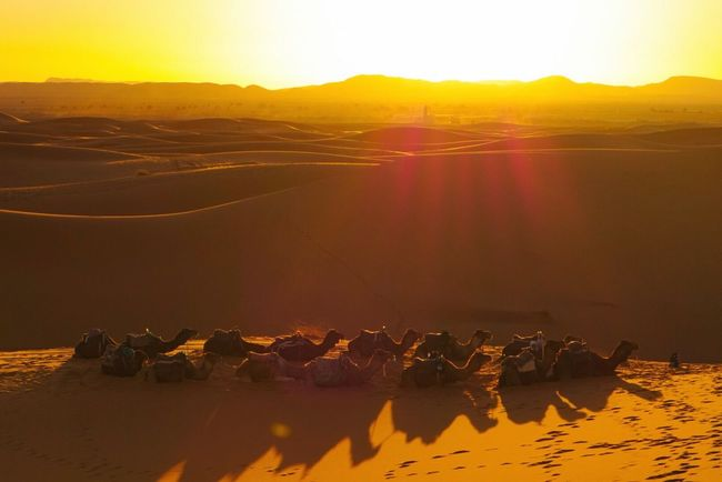 Camels are waiting for the sunset.