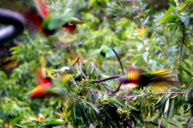 EyeEm Best Shots - Nature EyeEm Nature Lover Wildlifeconservation Birds In Flight