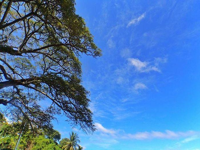 There's a blue sky waiting tomorrow, waiting tomorrow... shining and shimmering... 🎼🎶🎵🎶 Like4like Nature Outdoors Adventure Travel Photooftheday Wonderful_places Wonderful Life Wander Wanderer Igersoftheday Wanderlust Snapseed Explore Explorethebest Exploretocreate Philippines Sky Beautifulnature Igerscebu Random