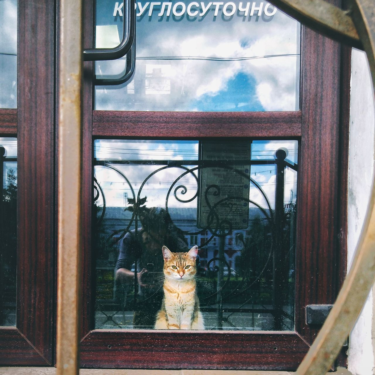 domestic cat, window, pets, feline, domestic animals, cat, mammal, one animal, animal themes, no people, day, indoors, looking through window, close-up, sky