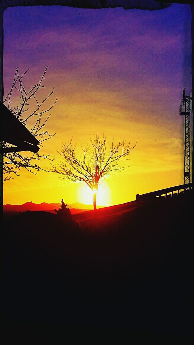Sun ☀ Tree And Sky Tree And Sun Lining Up The Right Place At The Right Moment