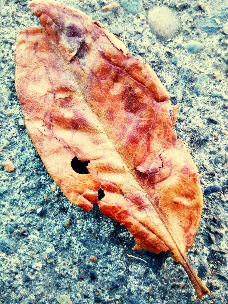 leaf, no people, nature, fish, change, close-up, autumn, day, outdoors, food, animal themes