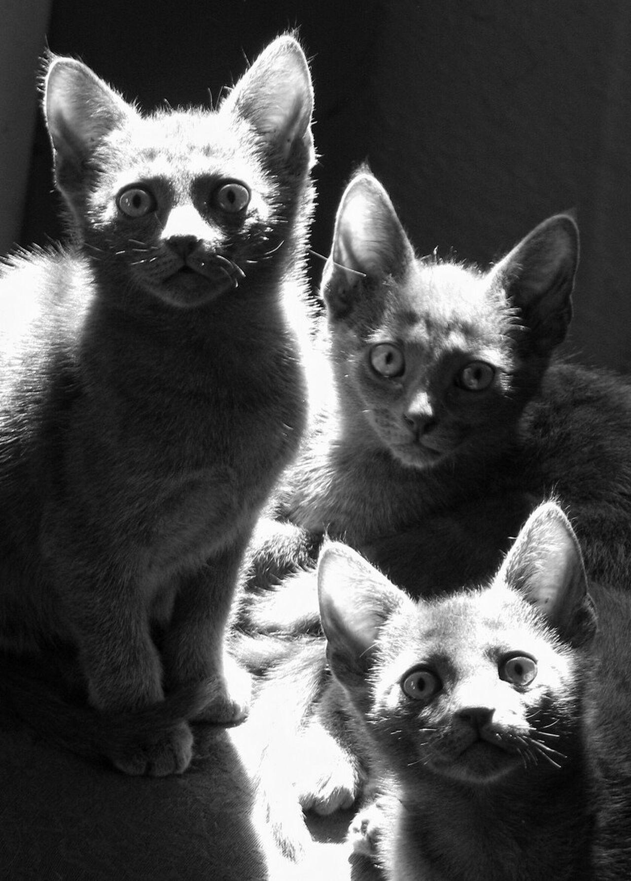 Perfect Match Three grey cats Cats Grey Cats Shades Of Grey Cats Of EyeEm My Cats Love Cats