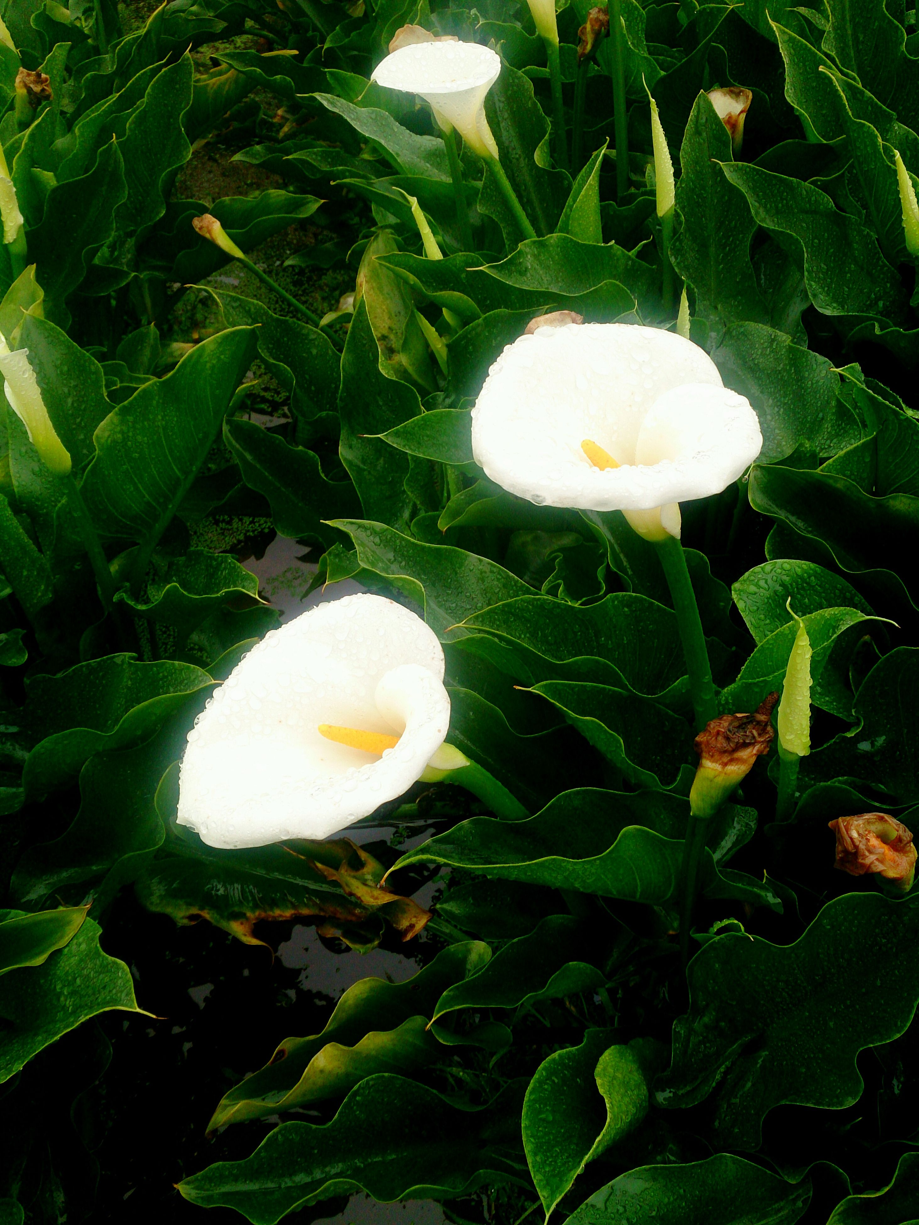 white color, freshness, growth, flower, fragility, beauty in nature, nature, green color, white, mushroom, close-up, flower head, leaf, high angle view, single flower, field, plant, petal, outdoors, day