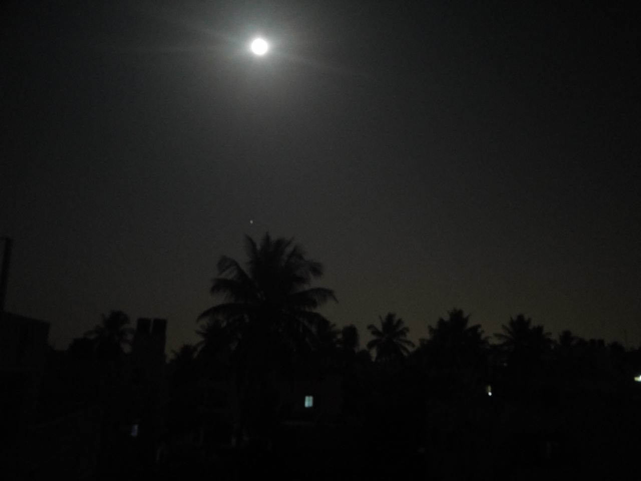 moon, tree, night, silhouette, palm tree, sky, low angle view, nature, beauty in nature, outdoors, clear sky, no people, scenics, moonlight, illuminated, astronomy